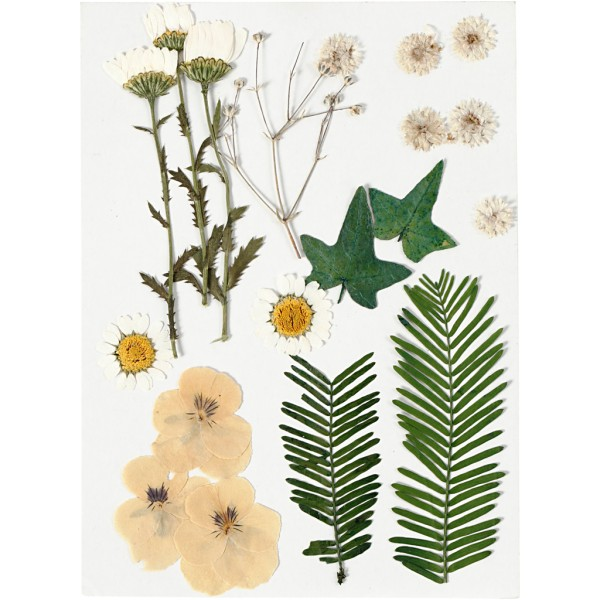 Assortiment de fleurs séchées et pressées - Jaune - 19 pcs environ - Photo n°1