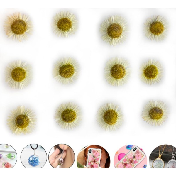 12pcs Blanc Daisy Camomille Teint Pressé de Fleurs Séchées Plantes Sèches Époxy Résine Uv Pendentif - Photo n°1