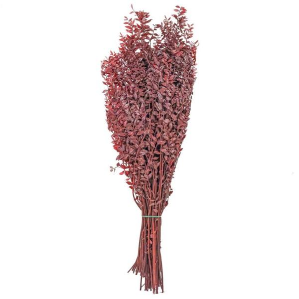 Branchage de ruscus rouge stabilisé - 90 cm. - Photo n°1