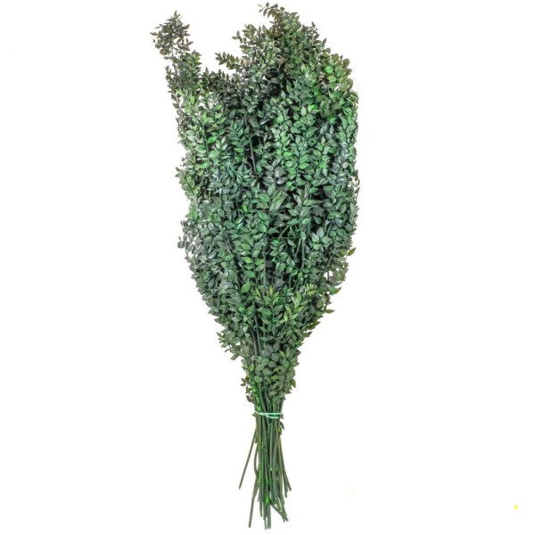 Branchage de ruscus vert stabilisé - 90 cm. - Photo n°2