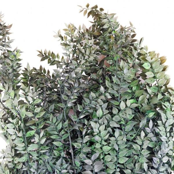 Branchage de ruscus vert stabilisé - 90 cm. - Photo n°3