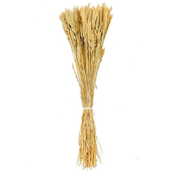 Bouquet de blé spiga d'oro - 38 cm - Photo n°1