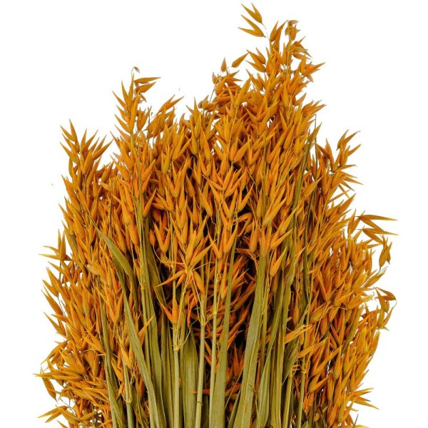 Bouquet fleurs séchées avoine orange - 70 cm - Photo n°3