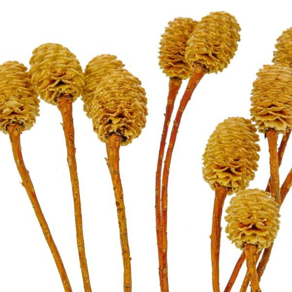 Fleurs de sabulosum blanchi - 15 têtes. - Photo n°3