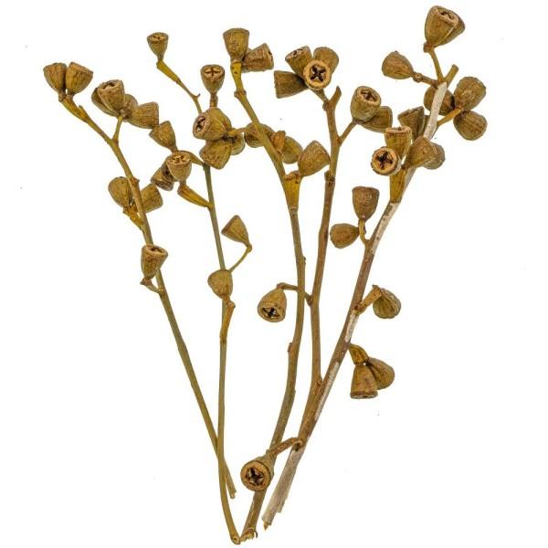 Branches d'eucalyptus avec fleurs - 20 à 30 cm - 100 grammes - Photo n°2