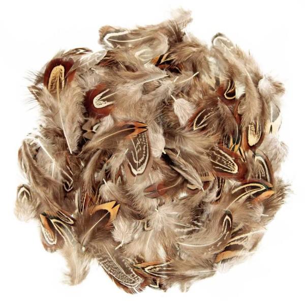 Plumes coquille de faisan commun - 5 grammes - Photo n°1