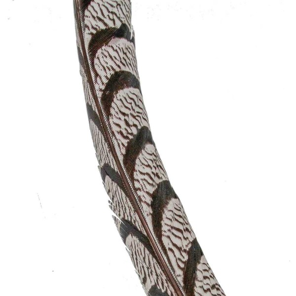 Plume gouttière de faisan Lady Amherst - 80 cm. - Photo n°3