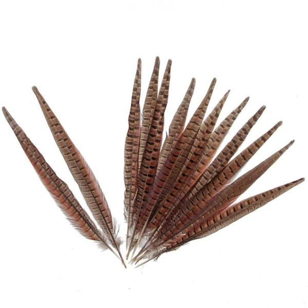 Grande plume de faisan commun - A l'unité - Taille 35 à 40 cm - Photo n°2