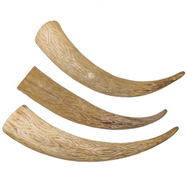 Corne de vache gravée - 40 à 50 cm - A l