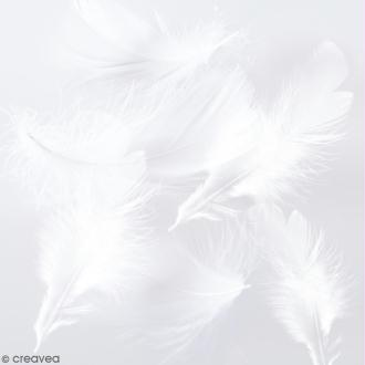 Plumes marabout - Blanches - 15 pcs