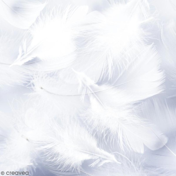 Plumes marabout - Blanches - 100 pcs - Photo n°1