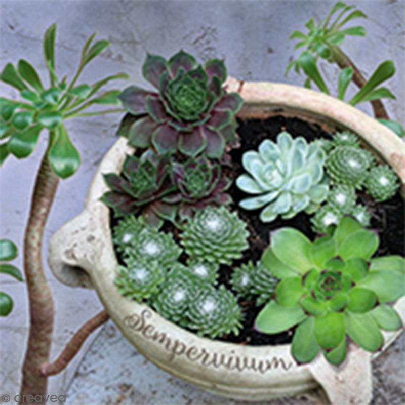 Serviette à l'unité - Succulents - Photo n°1