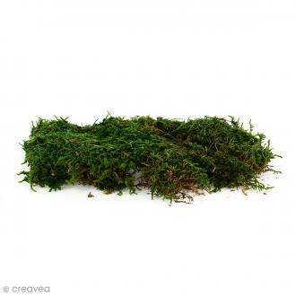 lichen scandinave stabilis medium green 50 g mousse. Black Bedroom Furniture Sets. Home Design Ideas