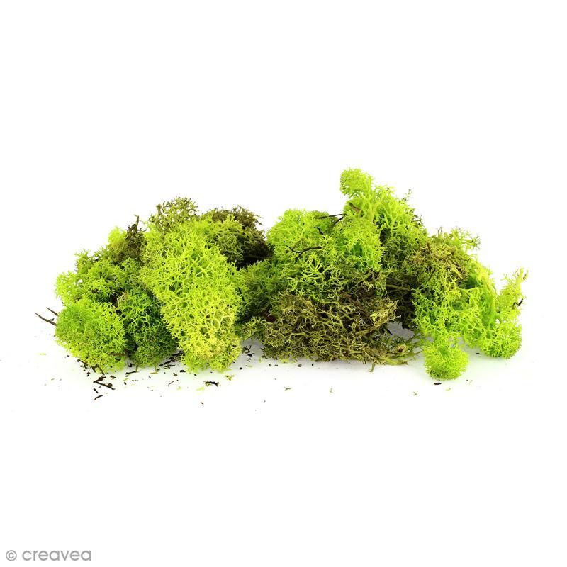lichen scandinave stabilis vert citron 50 g mousse et lichen stabilis creavea. Black Bedroom Furniture Sets. Home Design Ideas
