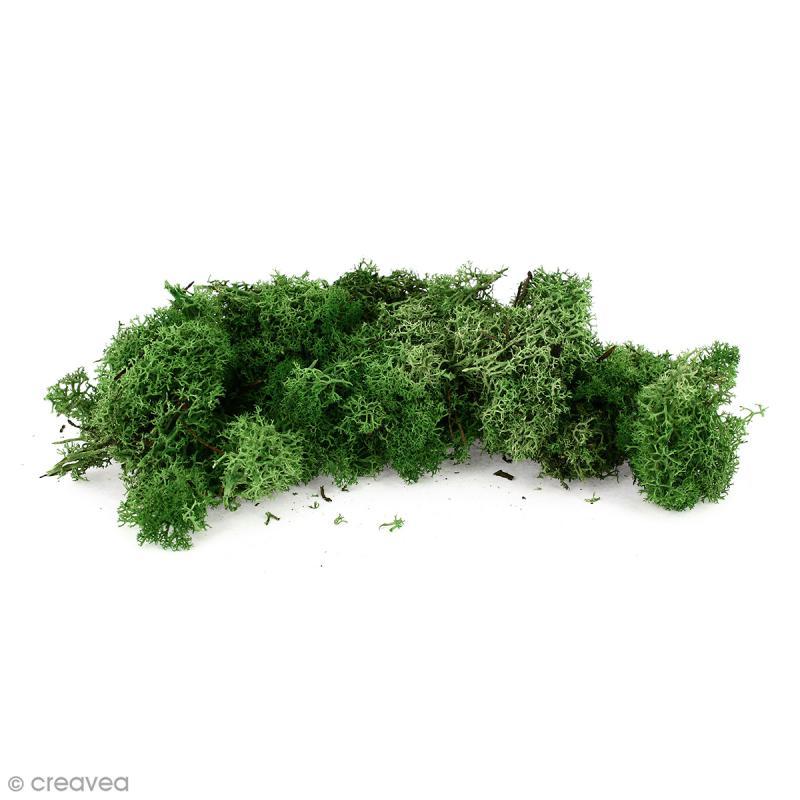 lichen scandinave stabilis vert nature 50 g mousse et lichen stabilis creavea. Black Bedroom Furniture Sets. Home Design Ideas