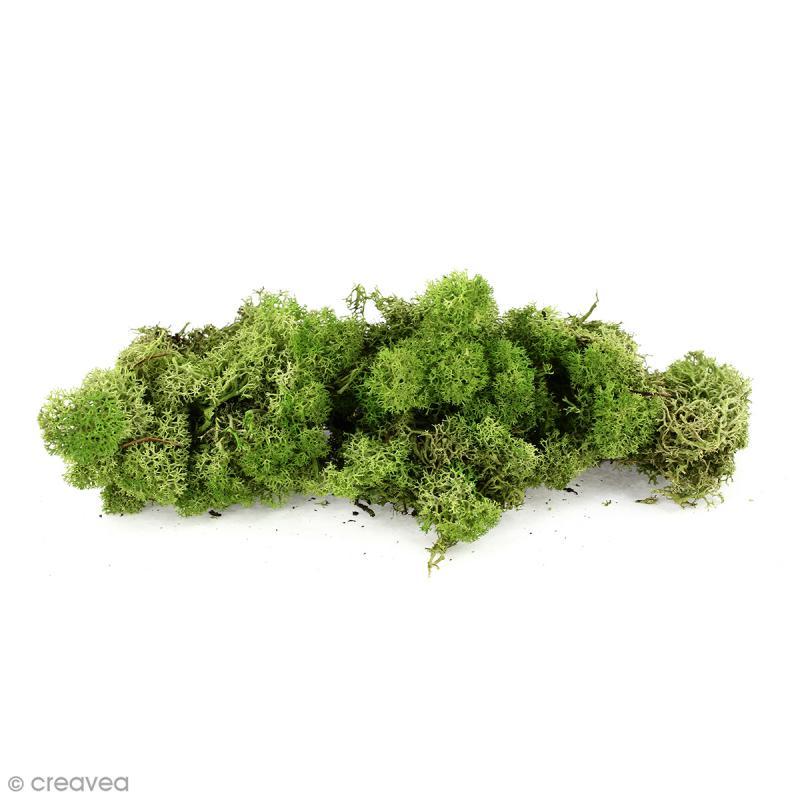 lichen scandinave stabilis medium green 50 g mousse et lichen stabilis creavea. Black Bedroom Furniture Sets. Home Design Ideas