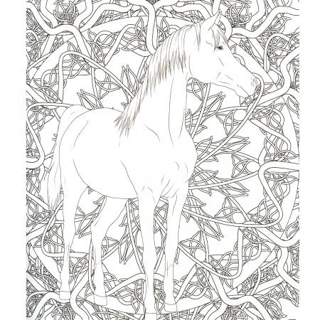Coloriage Adulte Cheval.Coloriage Anti Stress Cheval