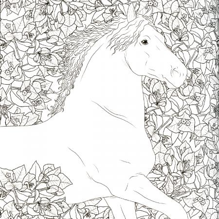 Coloriage Homme Cheval.Coloriage Anti Stress Cheval