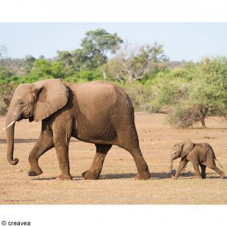 Image 3D Animaux - Éléphants - 24 x 30 cm