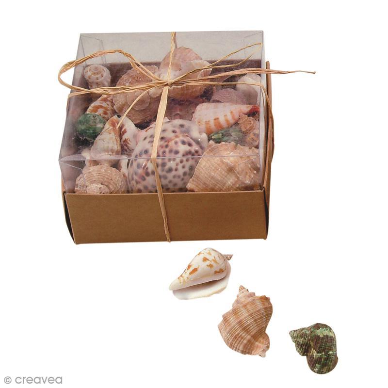 Coquillages Décoratifs - 430 g - Photo n°1