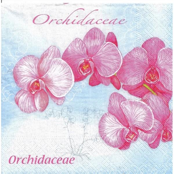 4 Serviettes en papier Fleurs Orchidées Format Lunch PT-84776 Papstar Decoupage Decopatch - Photo n°2