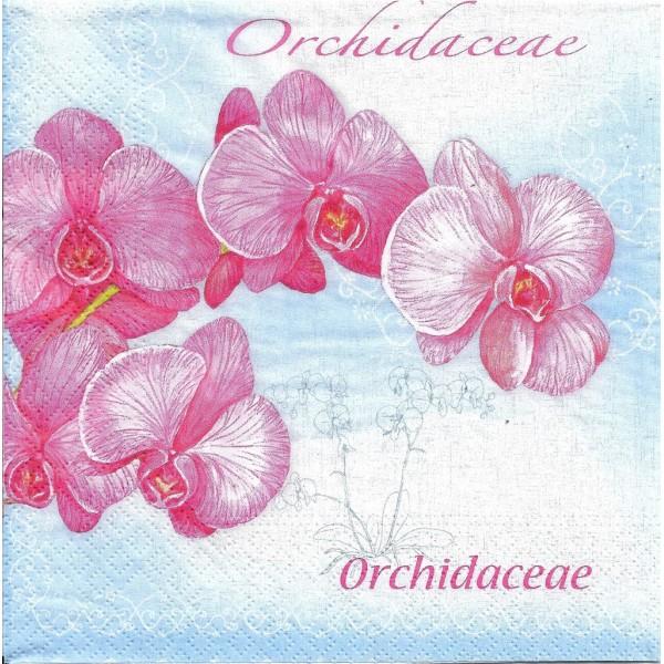 4 Serviettes en papier Fleurs Orchidées Format Lunch PT-84776 Papstar Decoupage Decopatch - Photo n°1