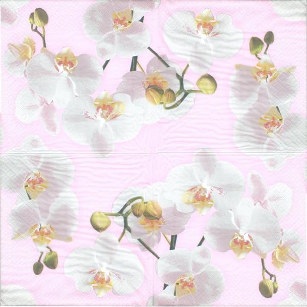4 Serviettes papier Orchidées Blanches Format Lunch Decoupage Decopatch Ti-Flair 367728 - Photo n°1