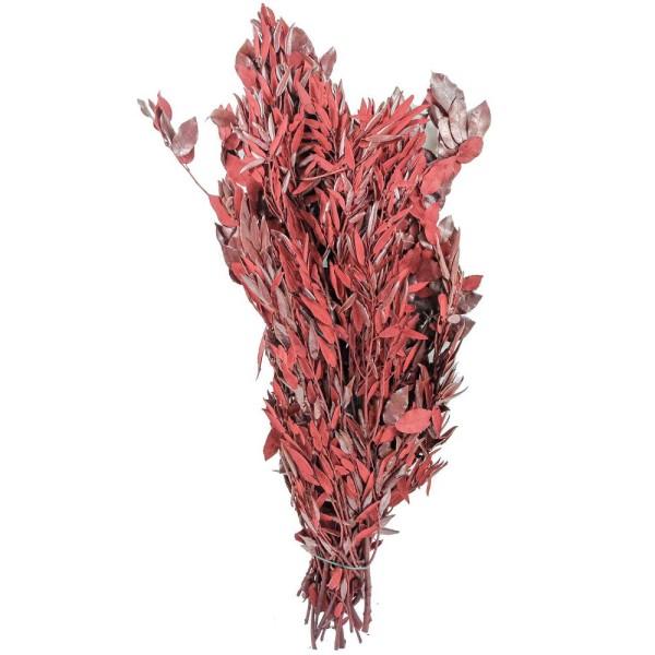 Quercus ilex rouge stabilisé - 90 cm. - Photo n°2