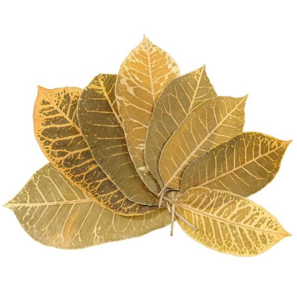 Feuilles leaf stripes - 14 à 20 cm - Lot de 25. - Photo n°1