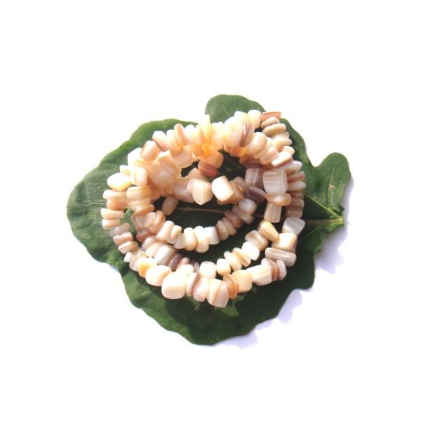 Coquillage multicolore  : lot de 50 chips 5/9 MM de diamètre environ - Photo n°1