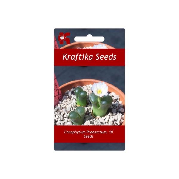 10 Graines Conophytum Praesectum Ophthalmophyllum, Mignon Plantes Grasses, Exotiques Rares Succulent - Photo n°1