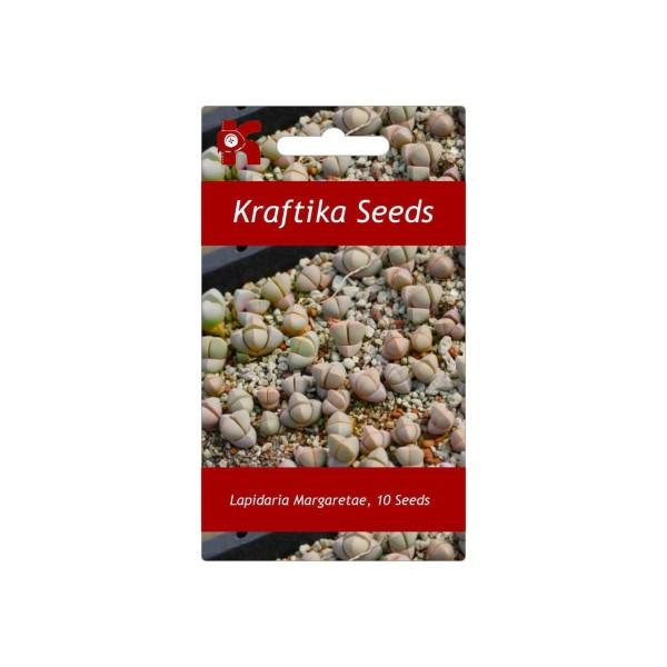 10 Graines Lapidaria Margaretae, Karoo Rose, Mignon Plantes Grasses, Exotiques Rares Succulentes Pla - Photo n°1
