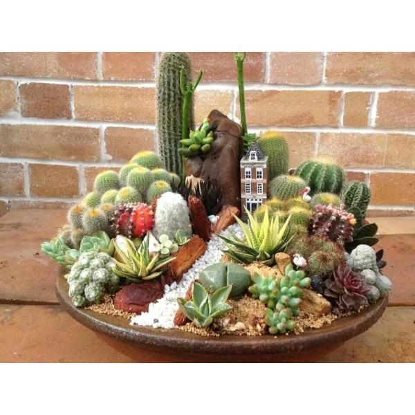 10 Graines De Cactus Mélange, Mignon Exotique Rare De Fleur De Cactus Plantes À Graines, Idée Cadeau - Photo n°2