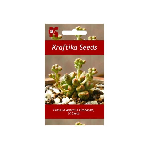 10 Graines De Crassula Ausensis Titanopsis, Cadeau, Mignon Plantes Grasses, Exotiques Rares Succulen - Photo n°1