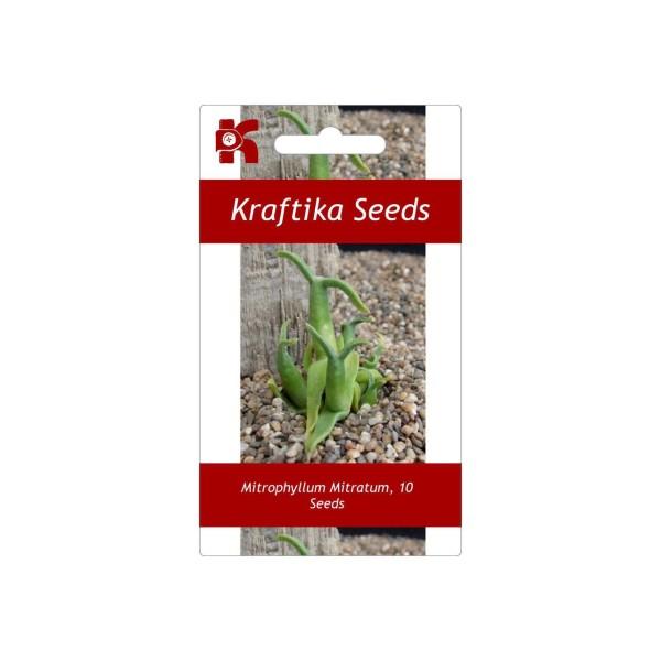 10 Graines Mitrophyllum Mitratum Escargot Succulentes, Cadeau, Mignon Plantes Grasses, Exotiques Rar - Photo n°1