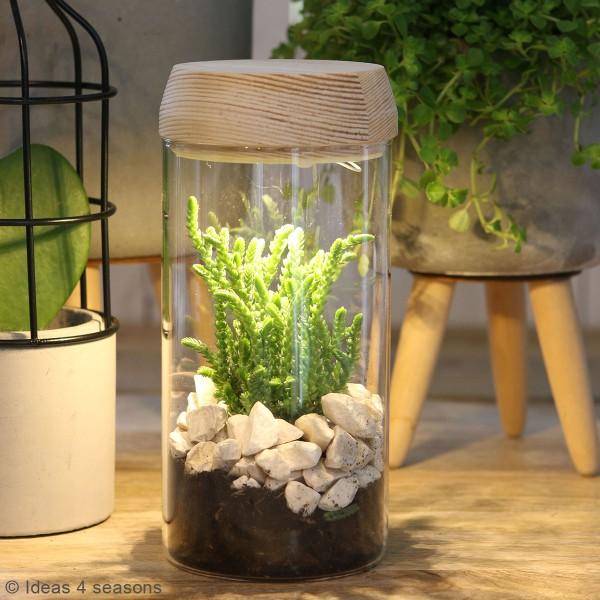 Vase Cylindrique - Terrarium avec LED - 8 x 18 cm - Photo n°2