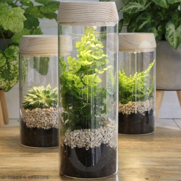 Vase Cylindrique - Terrarium avec LED - 8 x 18 cm - Photo n°5