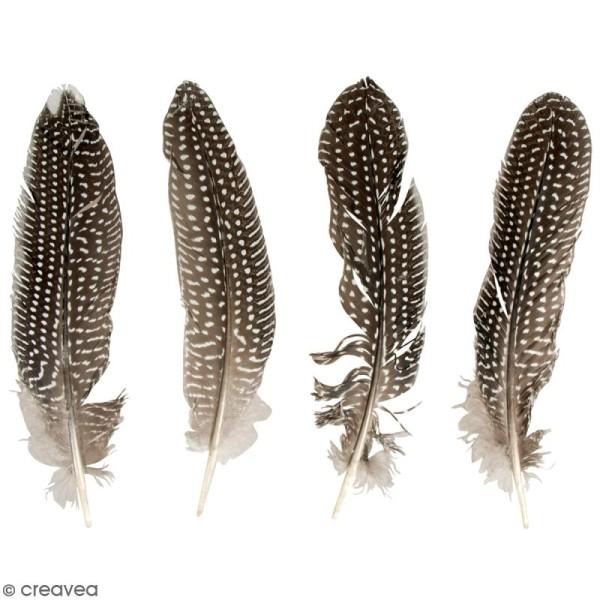 Plumes de faisan - 20 à 22 cm - 4 pcs - Photo n°1