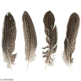 Plumes de faisan - 20 à 22 cm - 4 pcs
