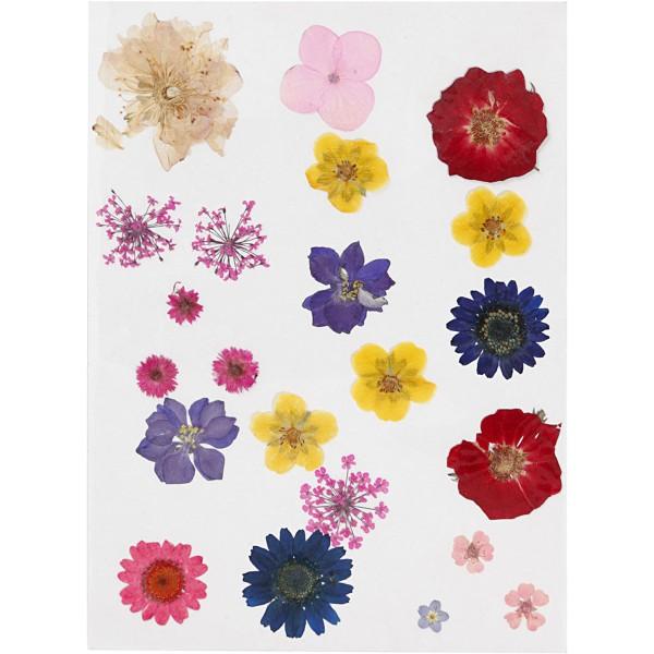 Assortiment de fleurs séchées et préssées - Couleurs assorties - 22 pcs environ - Photo n°2