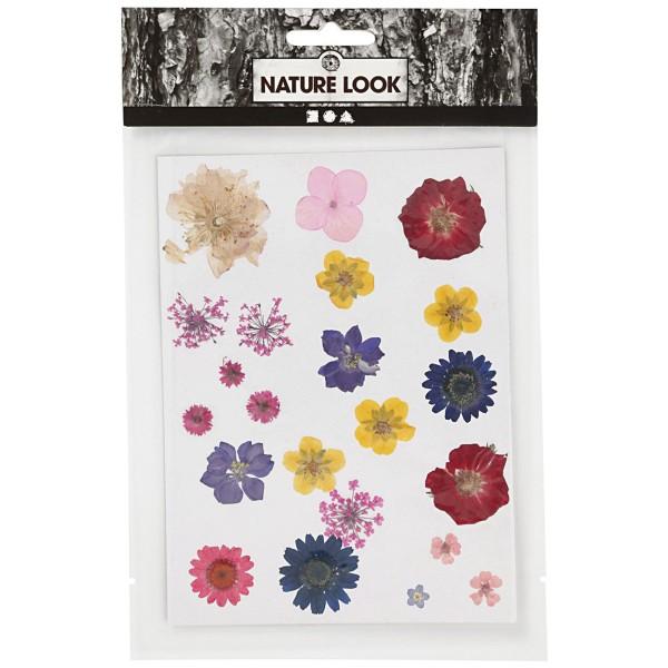 Assortiment de fleurs séchées et préssées - Couleurs assorties - 22 pcs environ - Photo n°1