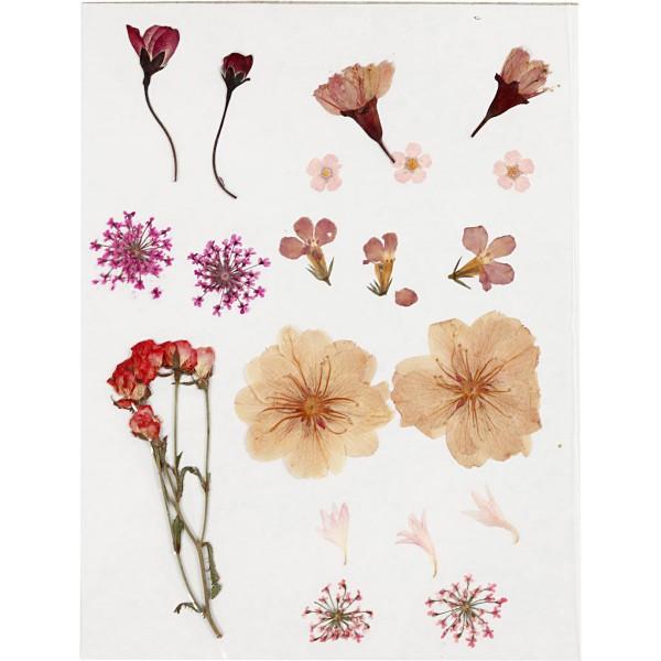 Assortiment de fleurs séchées et préssées - Rose Clair - 20 pcs - Photo n°2