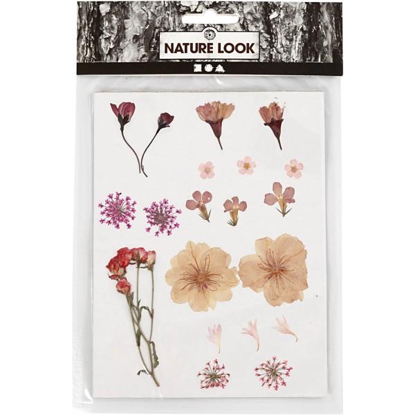 Assortiment de fleurs séchées et préssées - Rose Clair - 20 pcs - Photo n°1