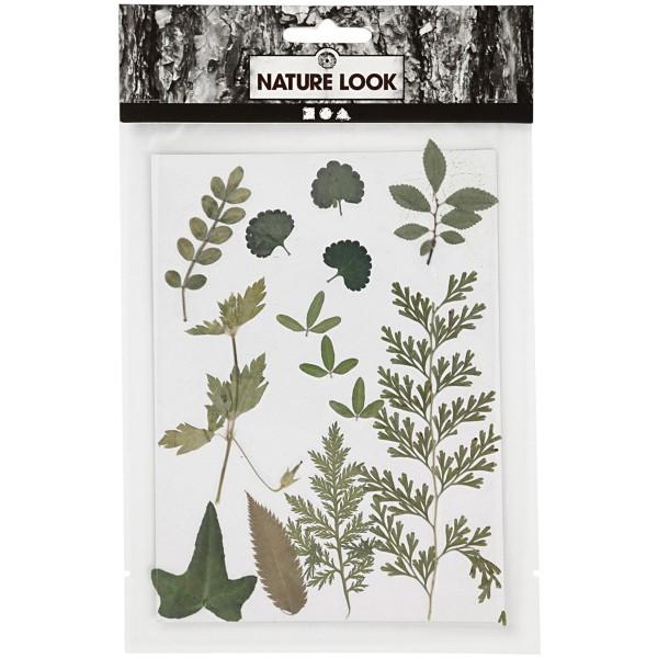 Assortiment de fleurs séchées et préssées - Vert feuillage - 20 pcs - Photo n°1