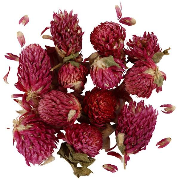 Fleurs Séchées - Trèfle rouge - 15 g - Photo n°1