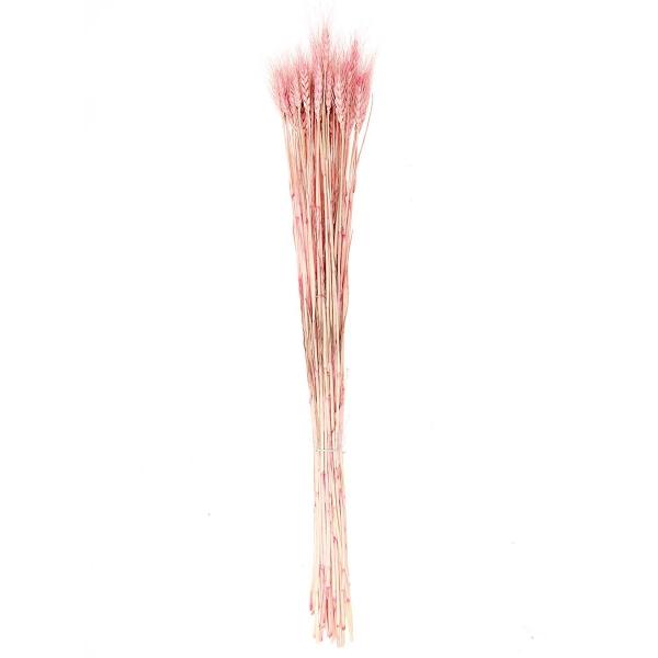 Fleurs séchées - Blé rose - 50 pcs - Photo n°1