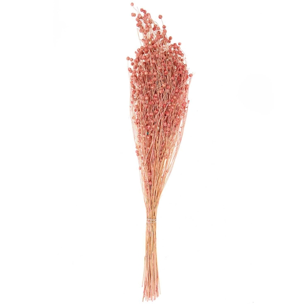Fleurs séchées - Lin séché rose - 100 g - Photo n°1