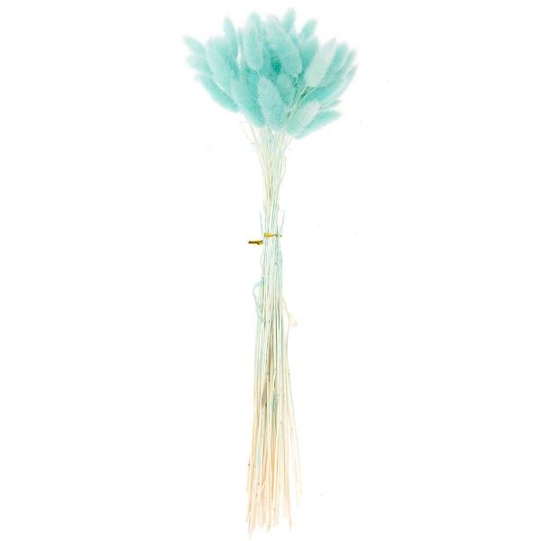 Fleurs séchées - Lagurus Turquoise - 50 pcs - Photo n°1