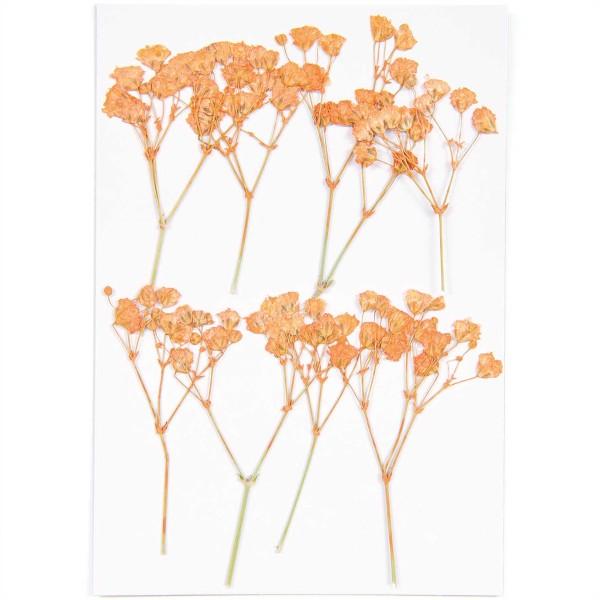 Fleurs pressées - Gypsophile Orange - 5,5 cm - 8 pcs - Photo n°3