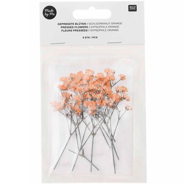 Fleurs pressées - Gypsophile Orange - 5,5 cm - 8 pcs - Photo n°1